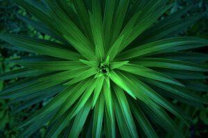 groene aromatische afbeelding